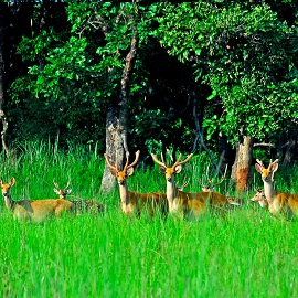 Safari parc de Chitwan